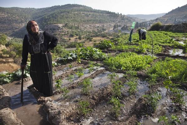 Tarasy uprawne w Battir